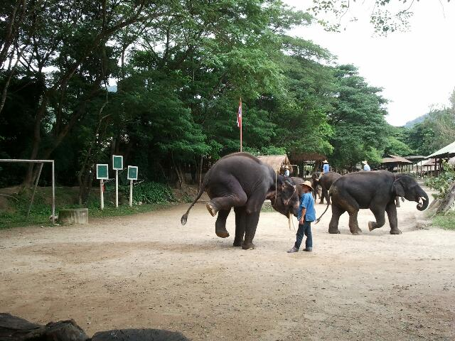 thailande-elephants-cirque