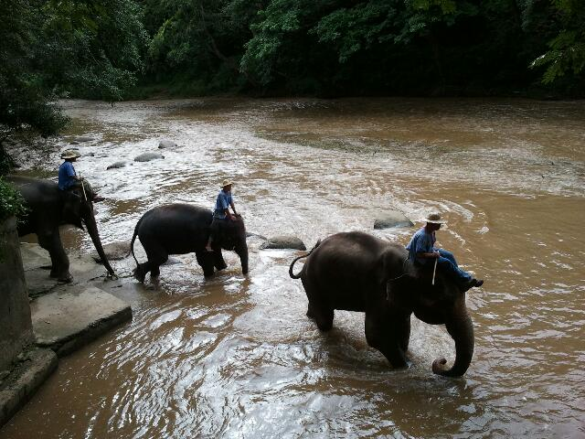 thailande-elephants-traversee